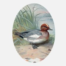 Widgeon, historical artwork Oval Ornament