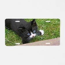 Tuxedo Kitten Aluminum License Plate