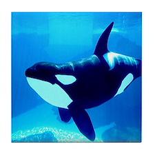 Killer Whale Tile Coaster