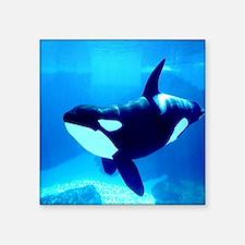 """Killer Whale Square Sticker 3"""" x 3"""""""