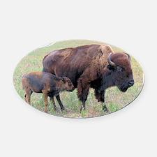 Bison in the Spring Oval Car Magnet