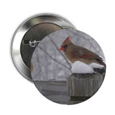 "Northern Cardinal Females 2.25"" Button"
