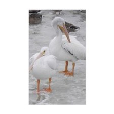 American White Pelicans Decal