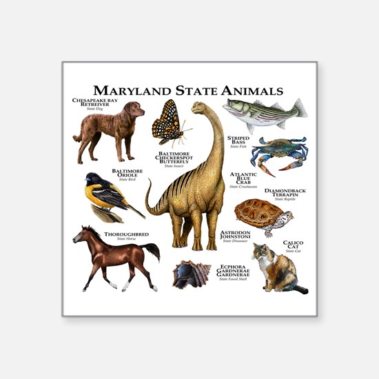 "Maryland State Animals Square Sticker 3"" x 3"""