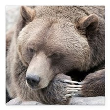 """Lazy grizzly Square Car Magnet 3"""" x 3"""""""