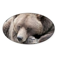 Lazy grizzly Decal