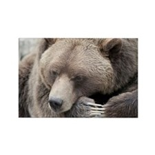 Lazy grizzly Rectangle Magnet