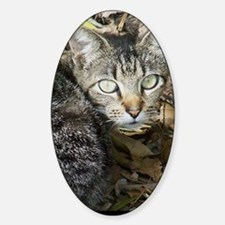 Stray with Leaves - Digital Photogr Sticker (Oval)