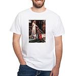 Accolade-AussieShep1 White T-Shirt