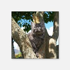 "Fluffy Grey Kitten Square Sticker 3"" x 3"""