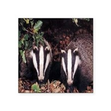 "Badgers Square Sticker 3"" x 3"""