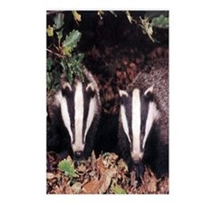 Badgers Postcards (Package of 8)