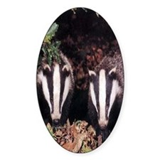 Badgers Decal