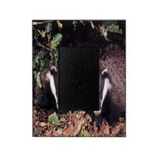 Badgers Picture Frame