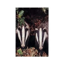 Badgers Rectangle Magnet