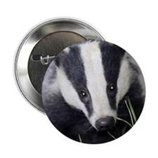 "Cute Badger 2.25"" Button"