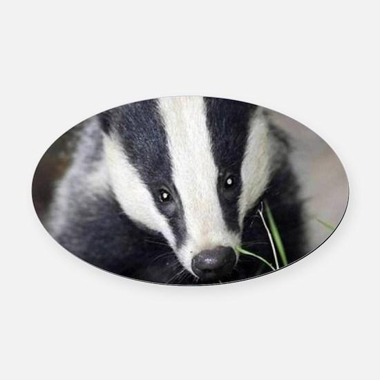 Cute Badger Oval Car Magnet