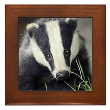 Cute Badger Framed Tile