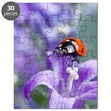 Flower Ladybug Puzzle