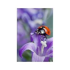 Flower Ladybug Rectangle Magnet