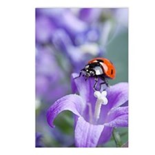 Flower Ladybug Postcards (Package of 8)