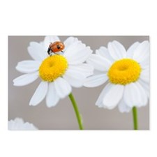 Daisy Ladybug Postcards (Package of 8)