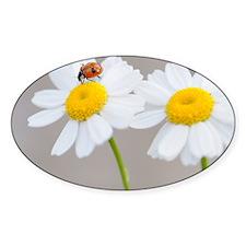 Daisy Ladybug Decal