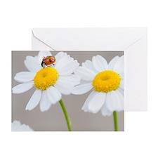 Daisy Ladybug Greeting Card