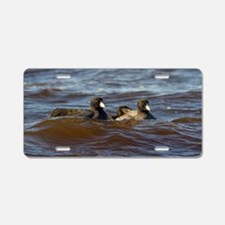American Coots Aluminum License Plate