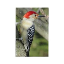 Red-bellied Woodpecker Rectangle Magnet