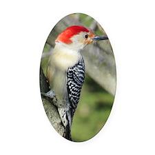 Red-bellied Woodpecker Oval Car Magnet