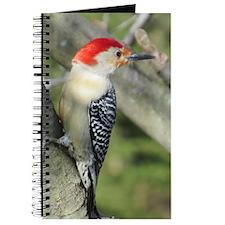 Red-bellied Woodpecker Journal