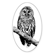 Mrs Barred Owl Decal