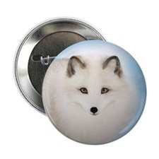 "Arctic Fox with Blue Background 2.25"" Button"