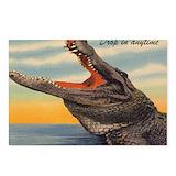 Alligator postcard Postcards
