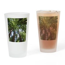 up into treetops Drinking Glass