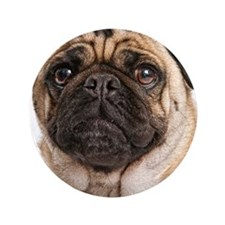 "Pug Close-Up 3.5"" Button"