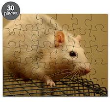 Shiva Puzzle