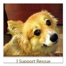"""I Support Rescue Square Car Magnet 3"""" x 3"""""""