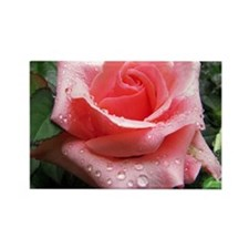 Pink Rose with Dew Rectangle Magnet
