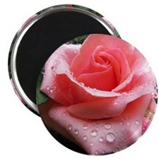 Pink Rose with Dew Magnet