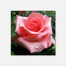 """Pink Rose with Dew Square Sticker 3"""" x 3"""""""