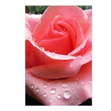 Pink Rose with Dew Postcards (Package of 8)