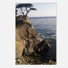 Cypress Postcards (Package of 8)