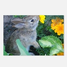baby bunny horizontal des Postcards (Package of 8)