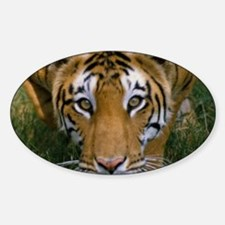 Tiger Face Decal