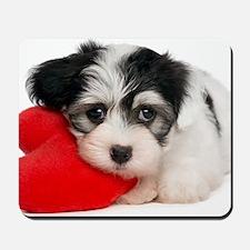 Lover Valentine Havanese Puppy Mousepad