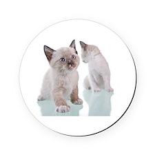 Baby Kitten Cork Coaster