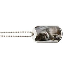 Lying kitten Dog Tags