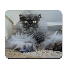 Colonel Meow surprise Mousepad